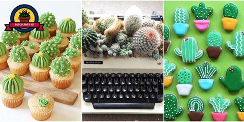 Cactus, Flowerpot, Plant, Houseplant, Table, Succulent plant, Pineapple,