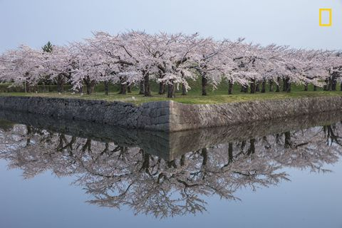 Body of water, Branch, Water resources, Reflection, Flower, Waterway, Blossom, Bank, Woody plant, Shrub,
