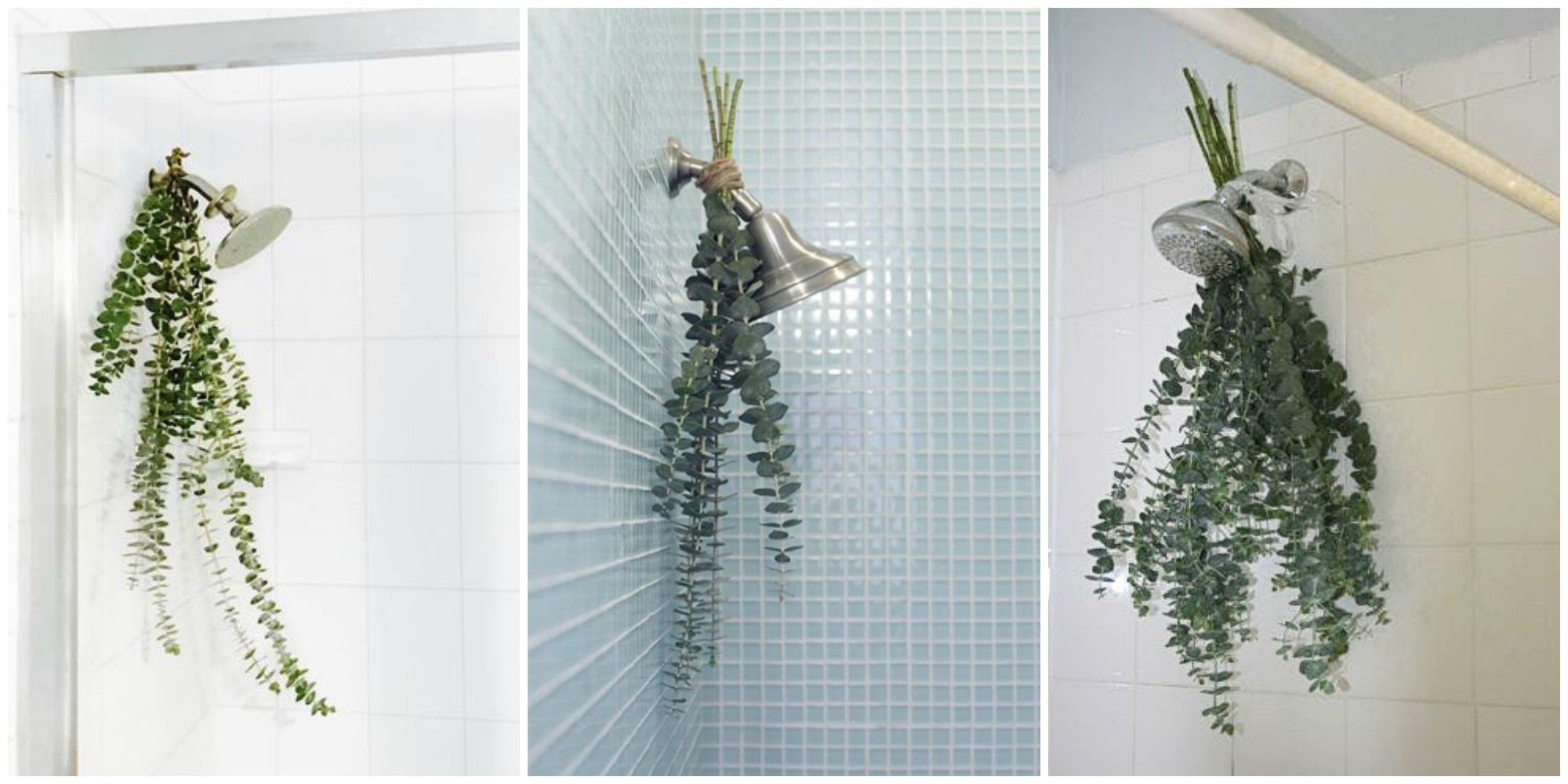 Eucalyptus \'Bath Bouquets\' Are the Easiest Way to Make Your Shower ...