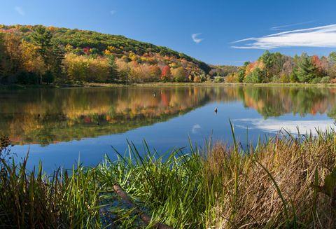 Body of water, Nature, Natural landscape, Natural environment, Reflection, Water, Landscape, Leaf, Bank, Wetland,