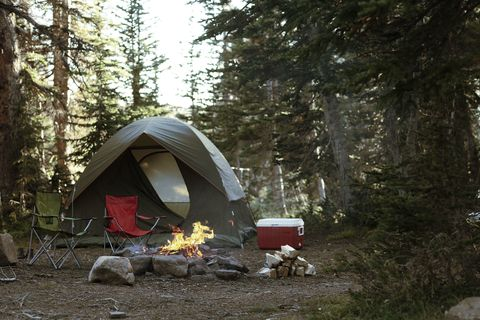 Camping, Tent, Natural environment, Wilderness, Leaf, Biome, Forest, State park, Woodland, Tree,