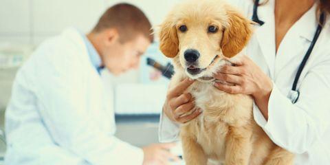 Human, Carnivore, Dog, Skin, Vertebrate, Dog breed, Hand, Sporting Group, Comfort, Companion dog,