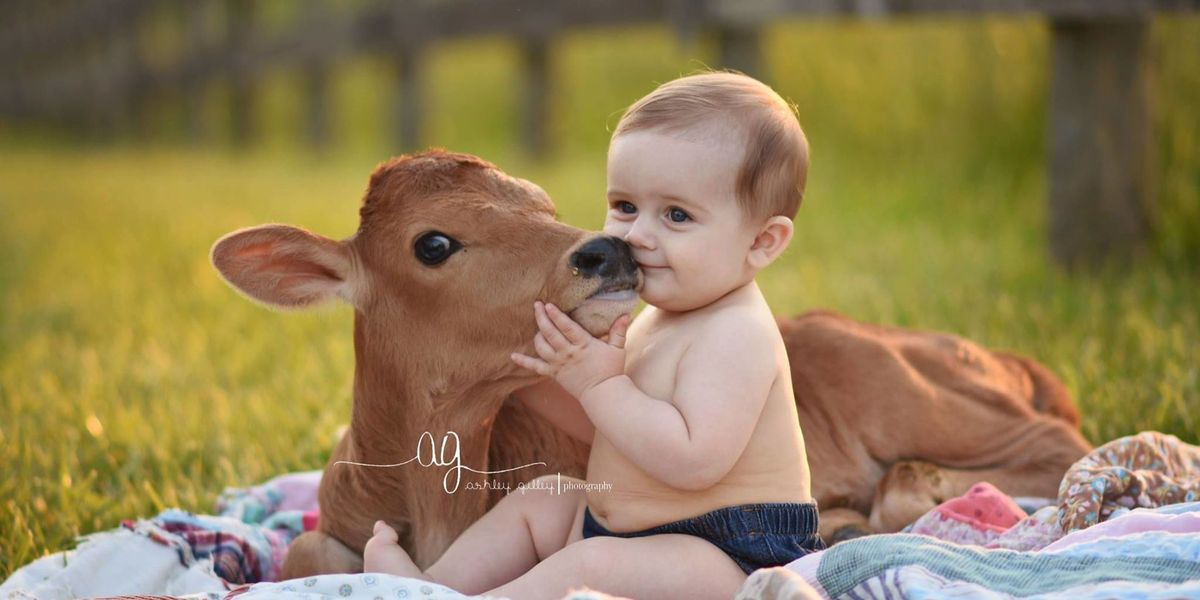 Cute Country Photography Photo Shoot With Cows And Babies