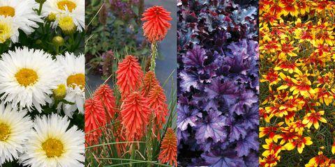 Flower, Flowering plant, Plant, Petal, Wildflower, Daisy family, Annual plant, Aster, Dahlia, Perennial plant,