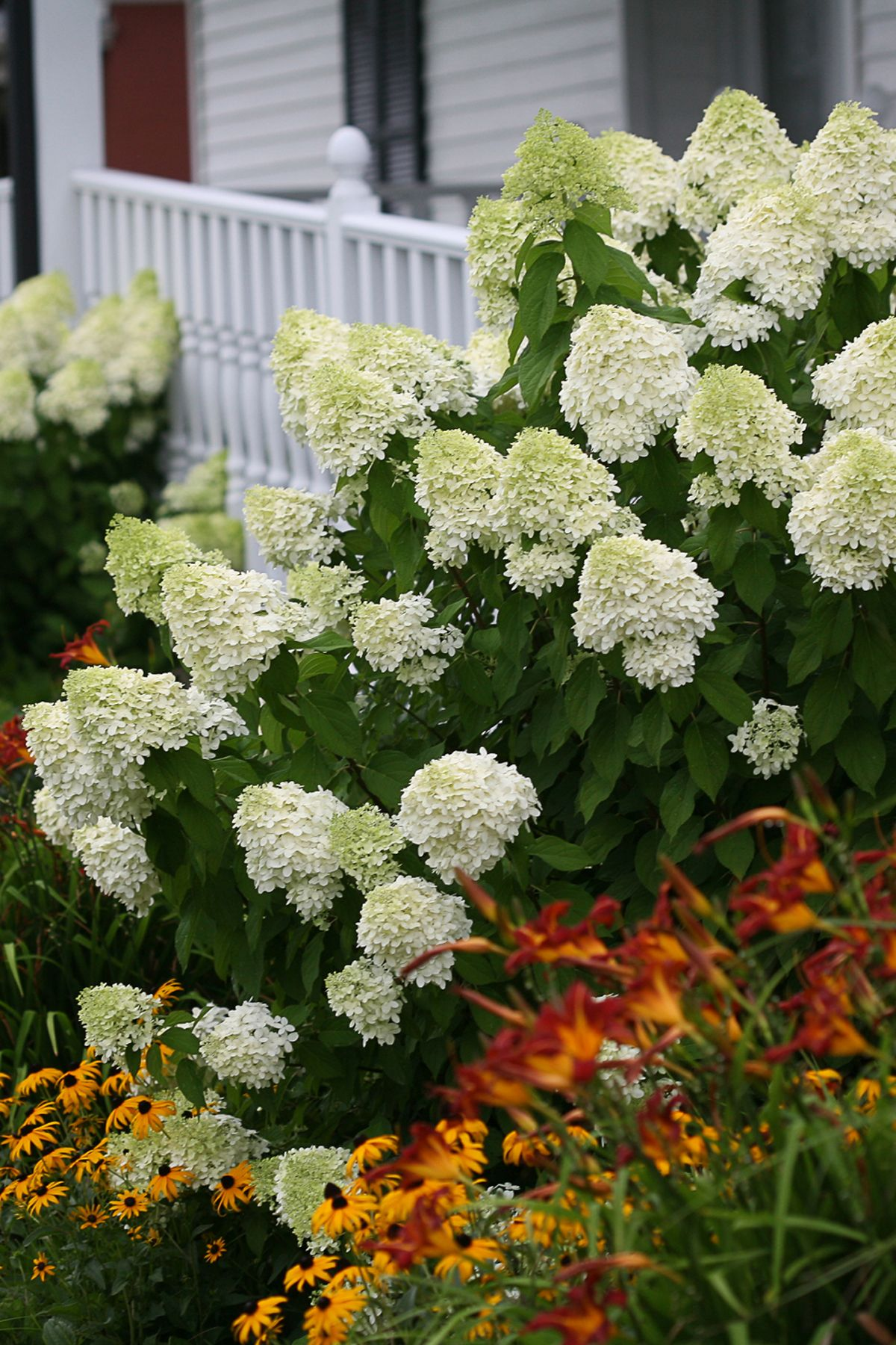 Best Hydrangeas For Every Climate Hydrangea Growing Conditions