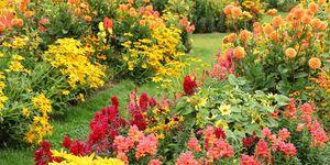 easy garden plants to grow