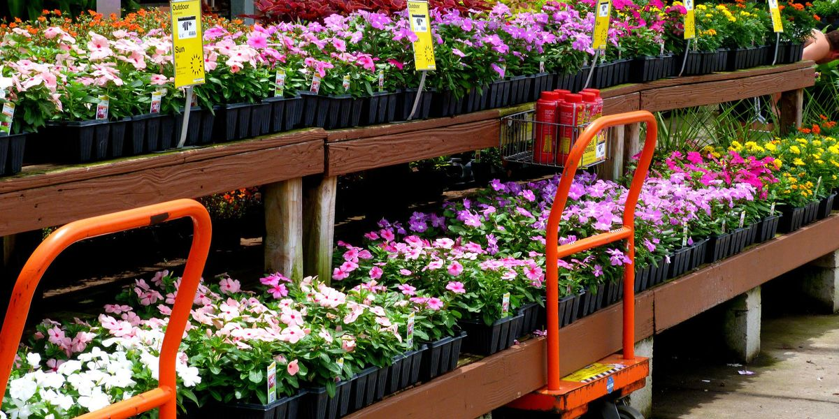 The Best The Home Depot Shopping Hack Revealed The Home Depot Plant Return Policy