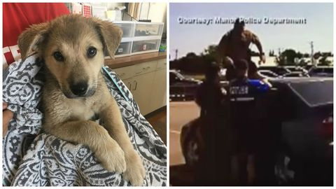 Dog, Dog breed, Canidae, Street dog, Carnivore, German shepherd dog, Sporting Group, Golden retriever, Puppy, Working dog,