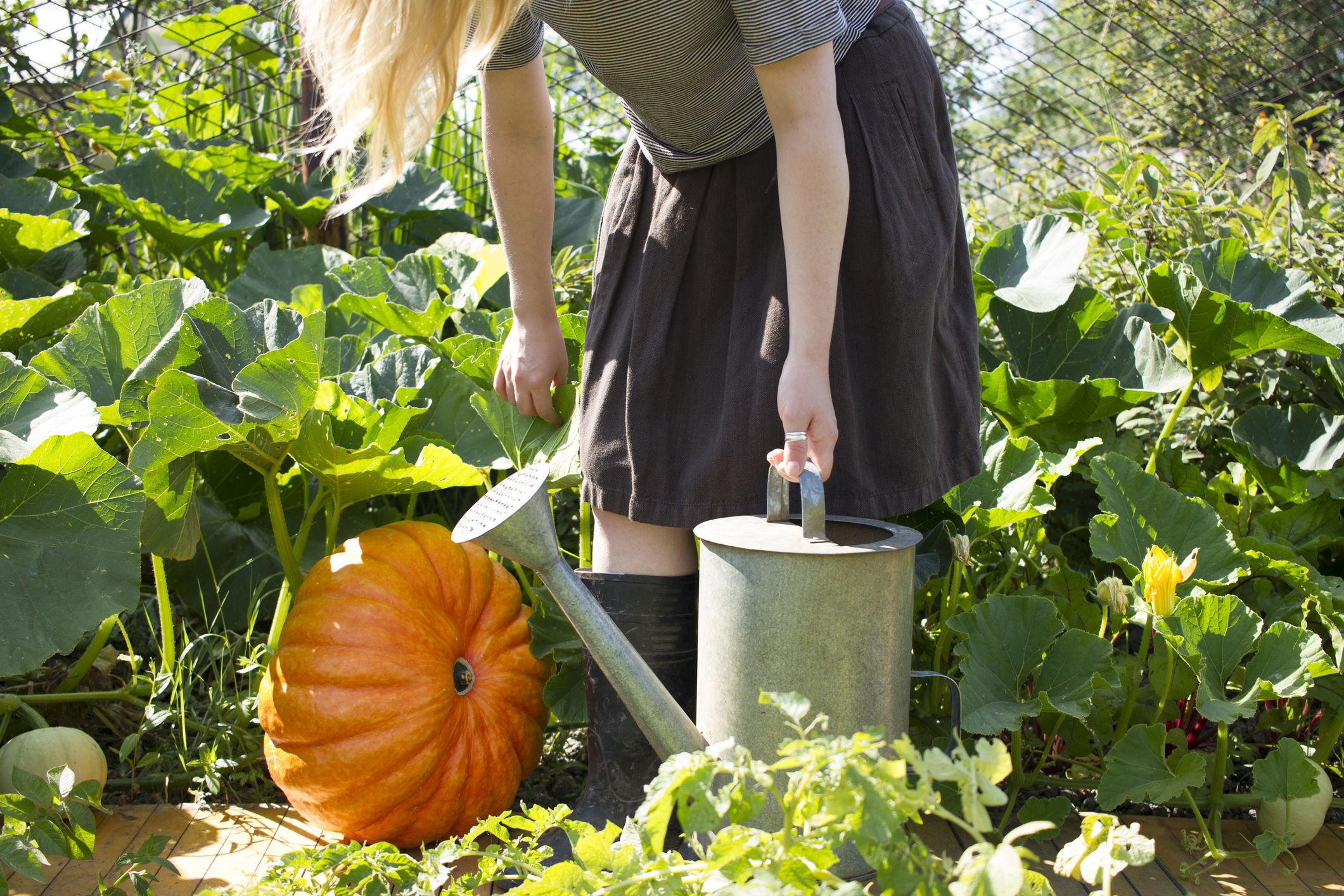 Planting Pumpkin Seeds 101: How to Grow Pumpkins