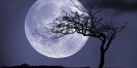 Moon, Sky, Nature, Full moon, Moonlight, Tree, Atmospheric phenomenon, Celestial event, Branch, Light,