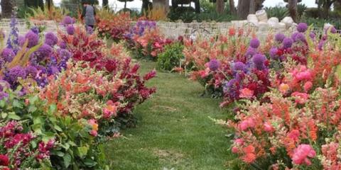 Vegetation, Nature, Plant, Shrub, Flower, Garden, Plant community, Leaf, Magenta, Landscape,
