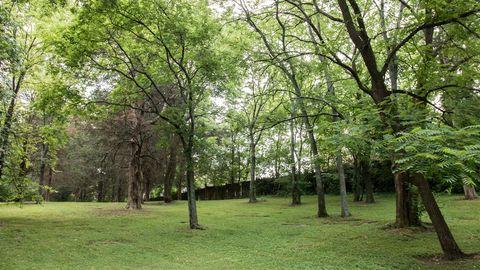 Tree, Natural landscape, Nature, Natural environment, Woodland, Green, Forest, Nature reserve, Grove, Vegetation,
