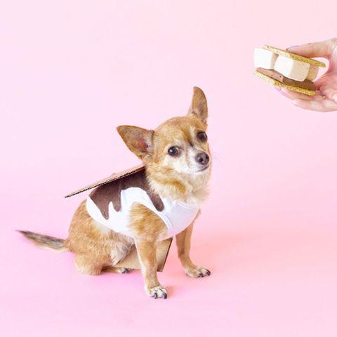 dog, canidae, mammal, pembroke welsh corgi, welsh corgi, cardigan welsh corgi, carnivore, dog breed, pink, puppy,