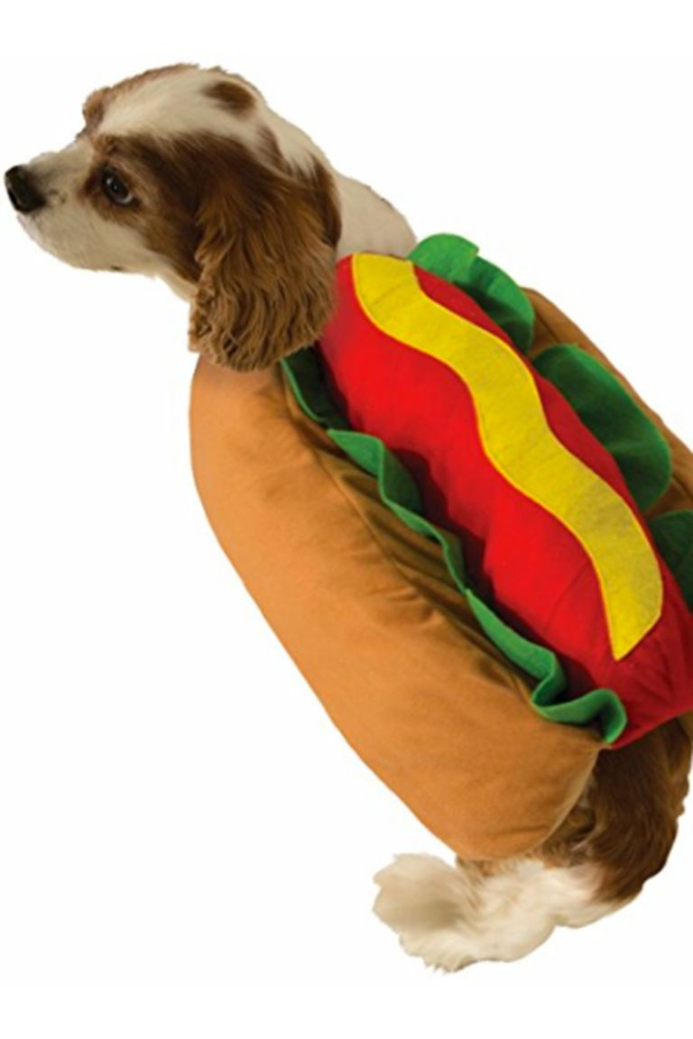 Cute Dog Halloween Costumes: 25 Cute Dog And Cat Halloween Costumes