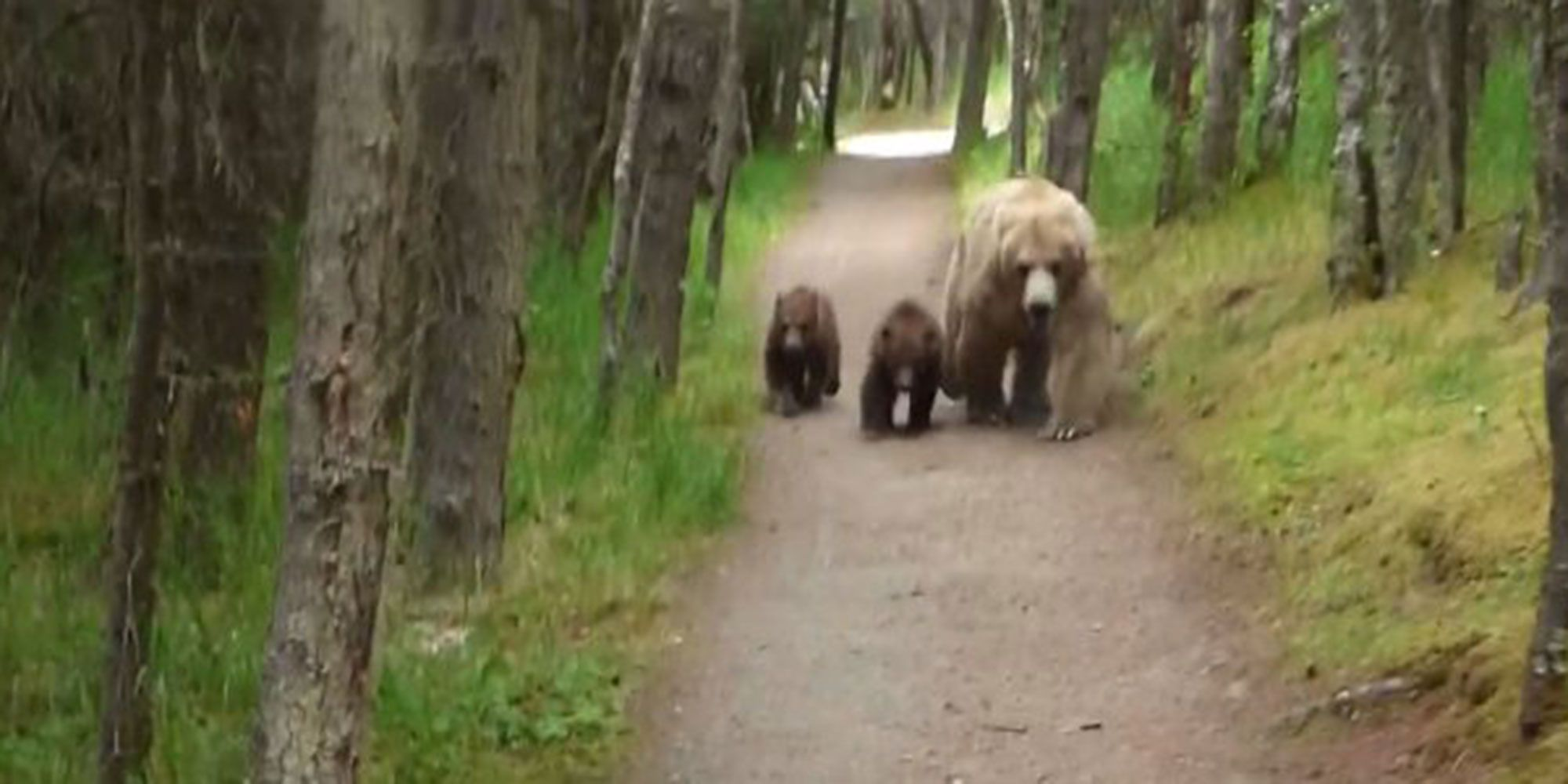 Grizzly Bears Followed This Hiker—And He Recorded the Whole Thing