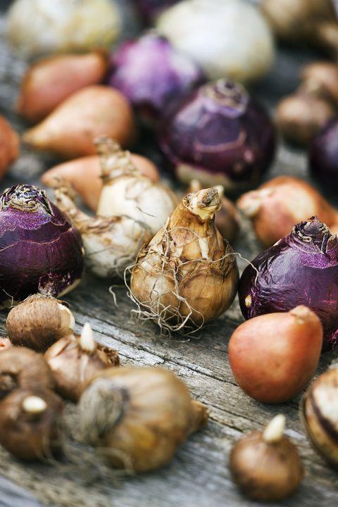 Natural foods, Elephant garlic, Vegetable, Local food, Onion, Food, Shallot, Garlic, Plant, Red onion,