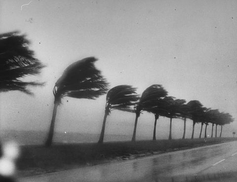 Photograph, Black-and-white, Monochrome photography, Monochrome, Snapshot, Tree, Photography, Sky, Plant, Tints and shades,