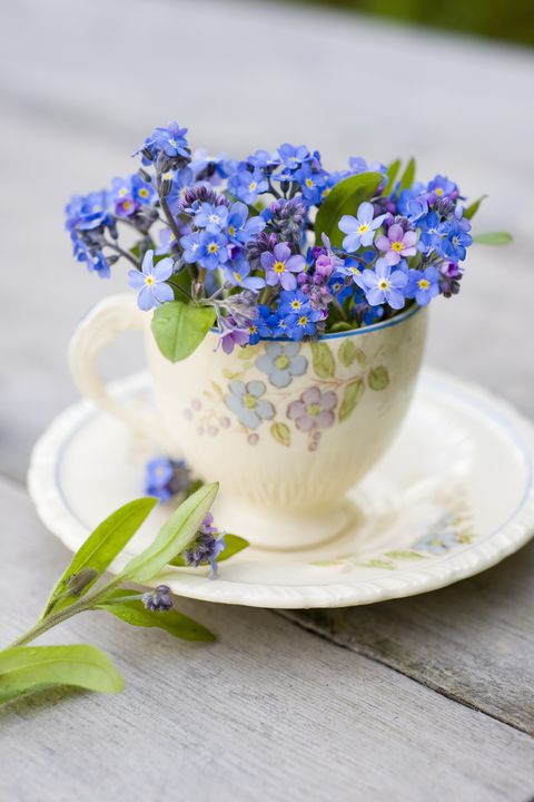 Flower, Blue, Forget-me-not, Plant, Purple, Violet, Flowering plant, Lavender, Bouquet, Cut flowers,