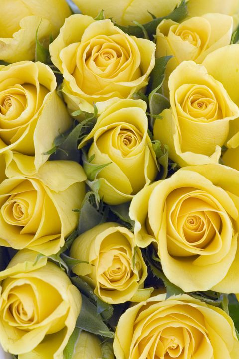 12 flowers and their meanings valentines day flower color yellow roses image mightylinksfo