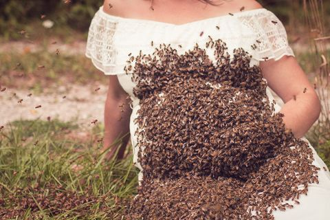 Soil, Grass, Plant, Bee, Insect, Honeybee,