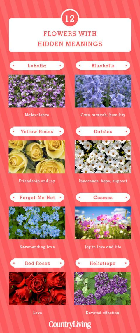 12 Flowers And Their Meanings Valentines Day Flower Color