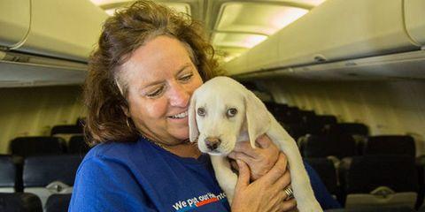 Mammal, Vertebrate, Dog, Dog breed, Canidae, Puppy, Nose, Companion dog, Carnivore, Sporting Group,