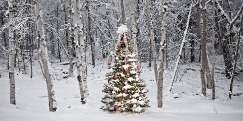 Snow, Tree, Winter, Christmas tree, Natural environment, Freezing, Frost, Woody plant, Forest, Plant,