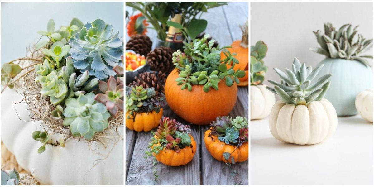 Pumpkin Planters For Your Porch