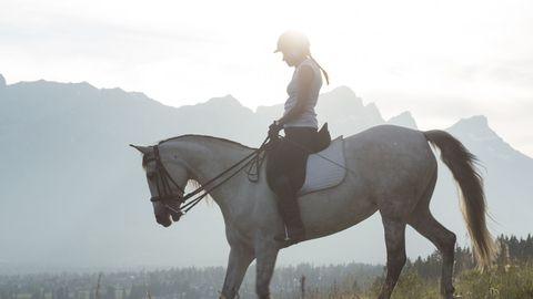 Horse, Bridle, Rein, Halter, Atmospheric phenomenon, Sky, Stallion, Recreation, Horse tack, Saddle,