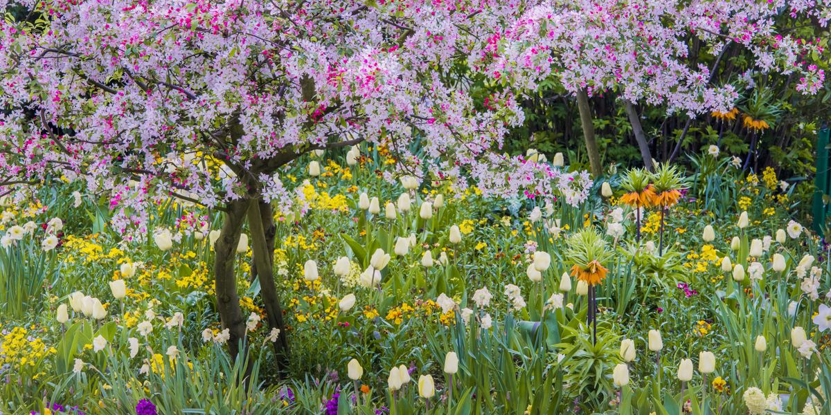 33 Bulbs You Need to Plant This Fall for a Beautiful Spring Garden