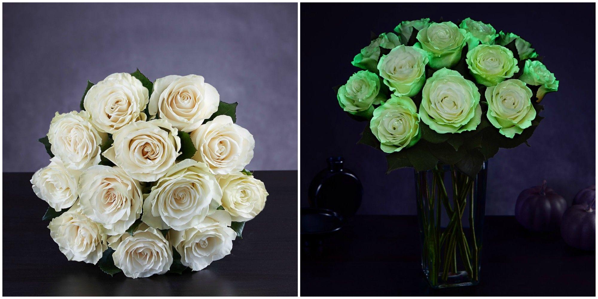 Spooky glow in the dark roses now exist halloween flowers izmirmasajfo Choice Image