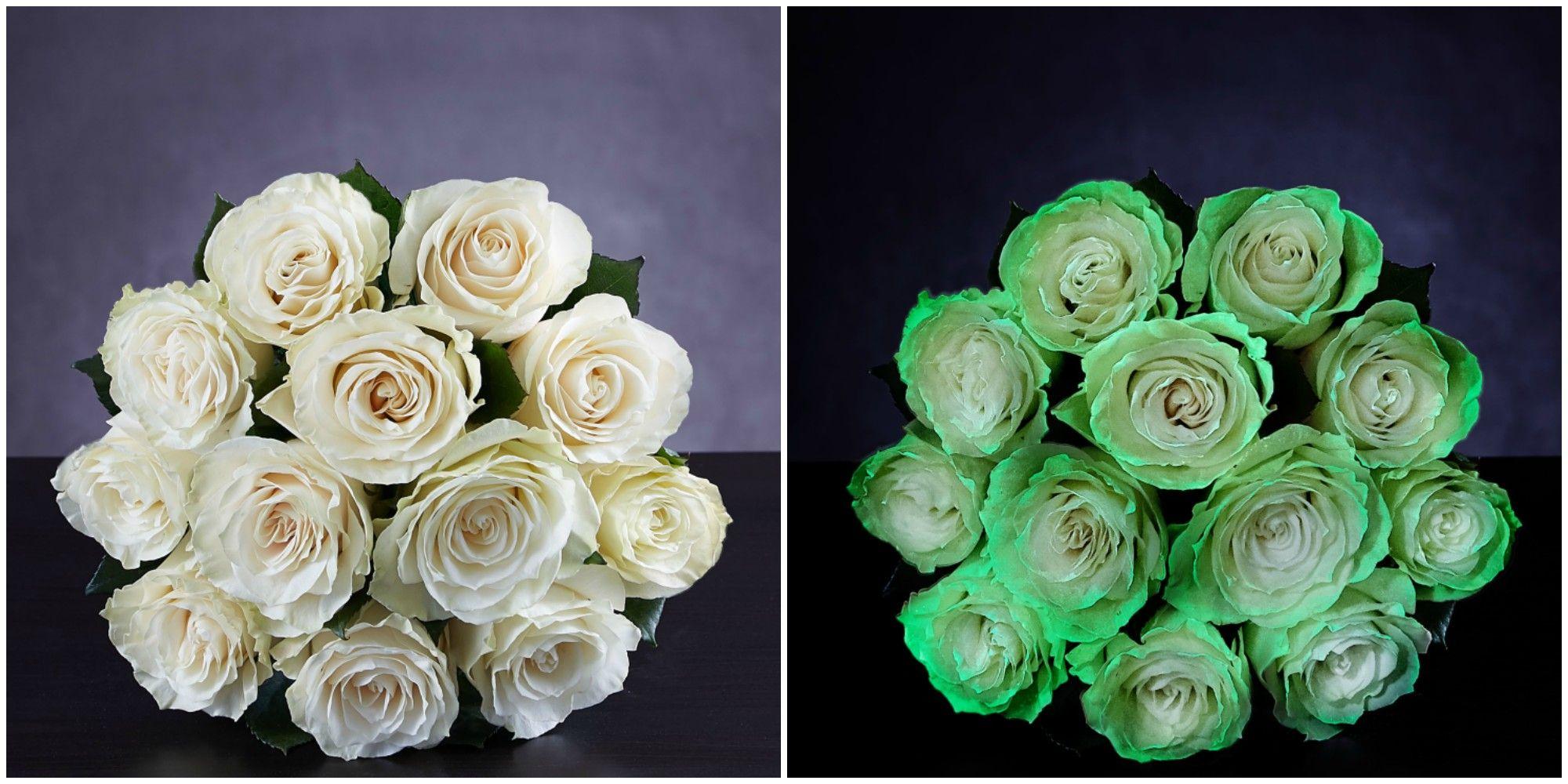 Spooky Glow-in-the-Dark Roses Now Exist - Halloween Flowers