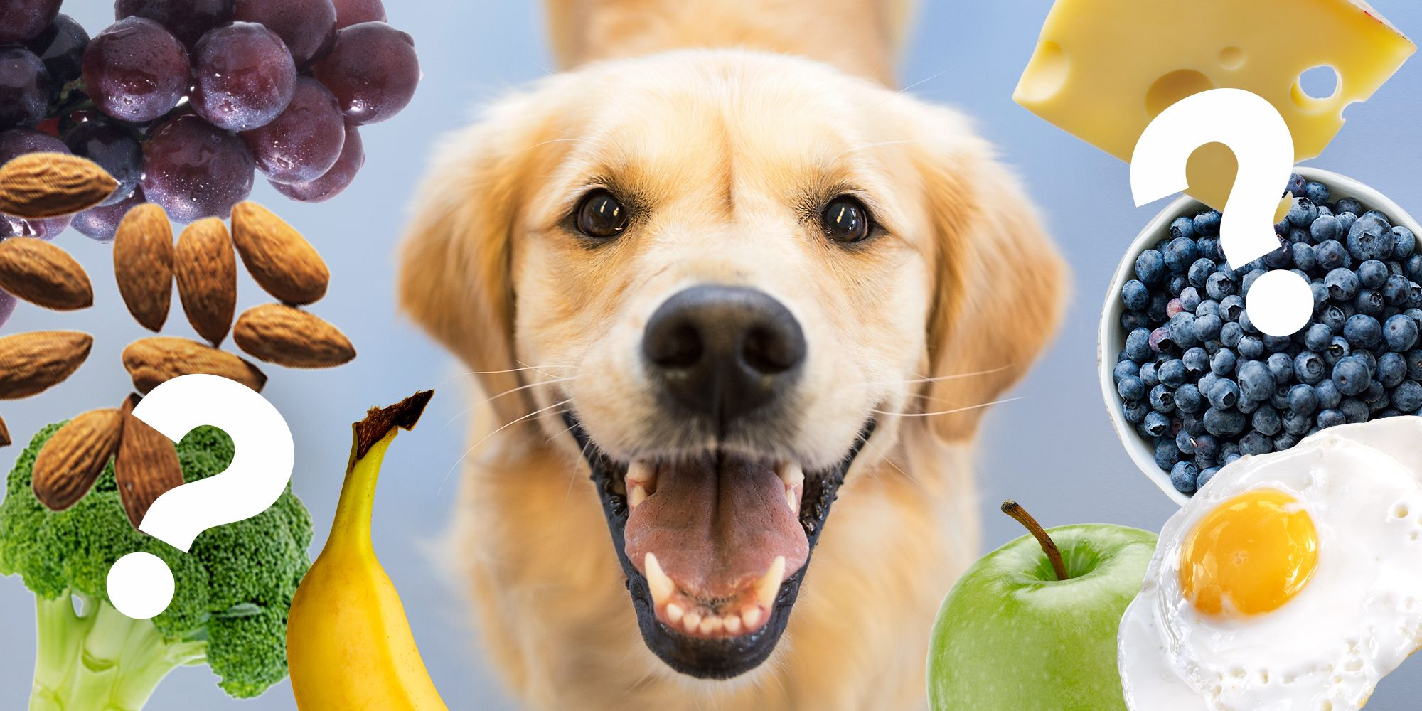 Can dogs have grapes How to Feed an Adult Dog