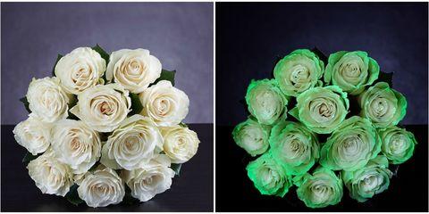 Flower, Garden roses, Rose, Cut flowers, Rose family, Plant, Bouquet, Floribunda, Pink, Petal,
