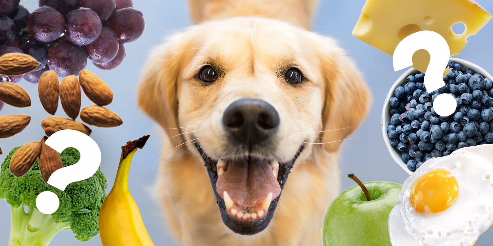 is pineapple bad for dogs