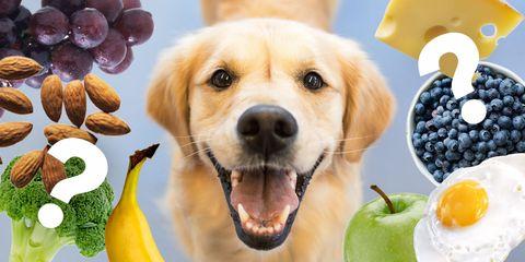 Dog breed, Canidae, Dog, Snout, Companion dog, Labrador retriever, Sporting Group, Retriever, Food, Puppy,