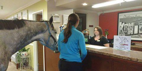 Horse, Organism, Room, Mane, Recreation, Mare, Horse grooming, Livestock,