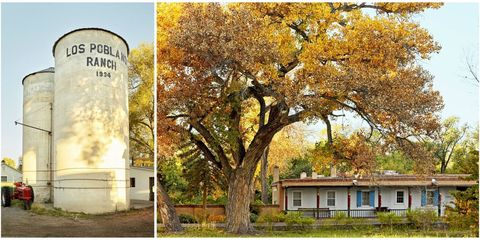 Tree, Natural landscape, Yellow, Woody plant, Leaf, Autumn, Plant, Adaptation, House, Architecture,