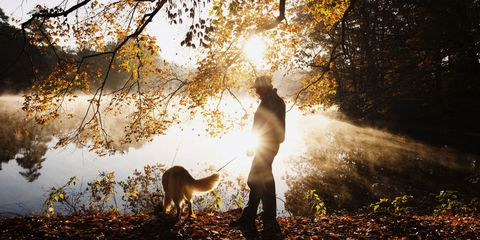 People in nature, Nature, Leaf, Sunlight, Autumn, Tree, Atmospheric phenomenon, Light, Sky, Backlighting,