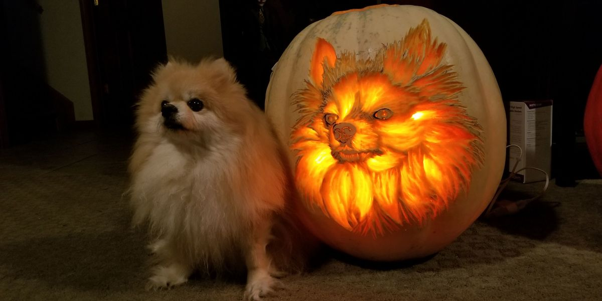 Dog-o'-Lanterns Are Going to Be Huge This Halloween
