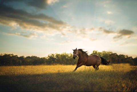 Horse, Mammal, Sky, Nature, Pasture, Grassland, Mustang horse, Wildlife, Natural landscape, Natural environment,
