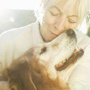 Mammal, Dog, Canidae, Dog breed, Nose, Retriever, Companion dog, Golden retriever, Carnivore, Snout,