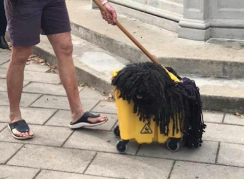 Broom, Asphalt, Household cleaning supply, Dog breed, Street sweeper, Mop,