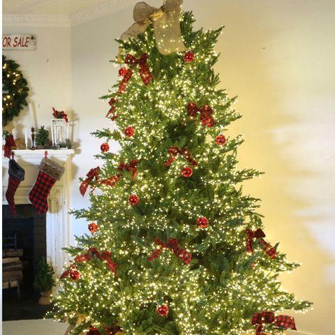 Brightest Christmas Tree