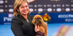 Newton the Brussels Griffon wins Best in Show at the National Dog Show