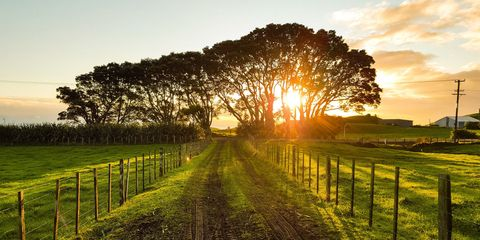 Natural landscape, Sky, Nature, Tree, Morning, Pasture, Sunrise, Atmospheric phenomenon, Grass, Field,