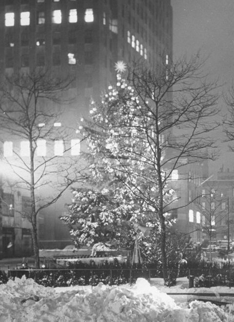 Snow, White, Winter, Winter storm, Tree, Blizzard, Freezing, Black-and-white, Monochrome, Urban area,