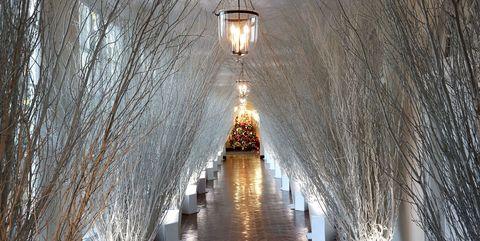 Light fixture, Chandelier, Lighting, Architecture, Lamp, Tree, Ceiling, Room, Ceiling fixture, Interior design,