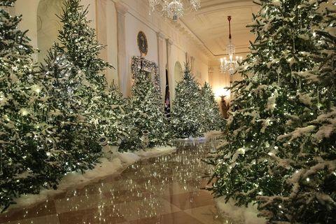Tree, Christmas tree, Winter, Snow, Lighting, Christmas, Christmas decoration, Woody plant, Architecture, Plant,