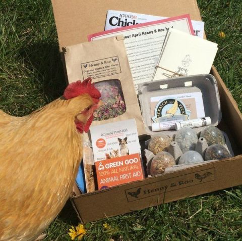 henny & roo chicken keeper subscription box